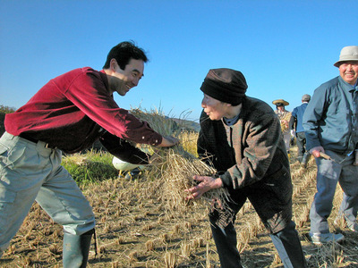 稲刈り・かる2.jpg